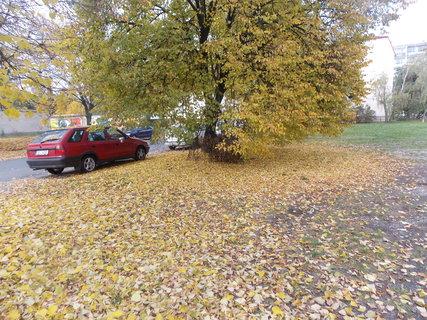 FOTKA - Koberec z listí