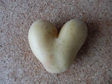FOTKA - brambora