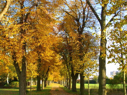 FOTKA - Když je pěkný podzimní den