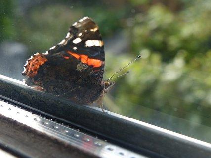 FOTKA - za oknem