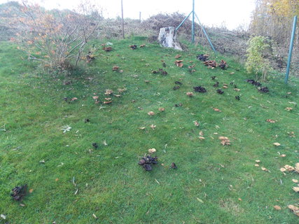 FOTKA - Zahrada posetá václavkami