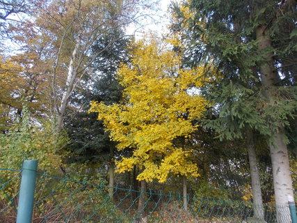 FOTKA - dva zelené a jeden žlutý