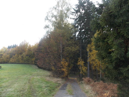 FOTKA - cestička do lesa