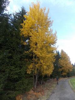 FOTKA - Vysoký žlutý