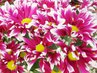 Sedmnáctého listopadu má svátek Mahulena