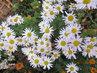 v listopadu krásně kvetou