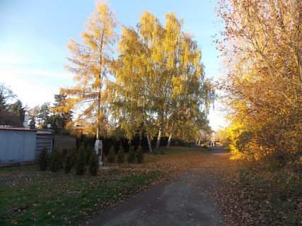 FOTKA - Barvení podzimu