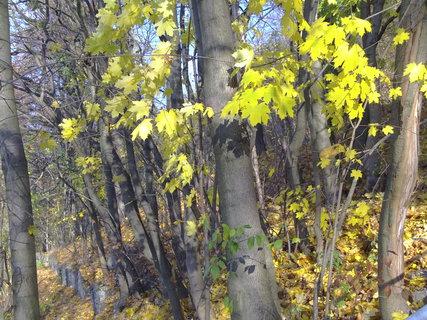 FOTKA - Zámecký park na podzim