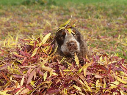 FOTKA - mam takovy pocit, ze je podzim