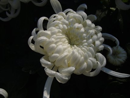 FOTKA - zvláštne kvitnúca