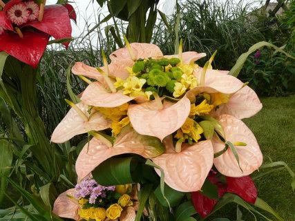 FOTKA - zvláštní barva květů toulitky