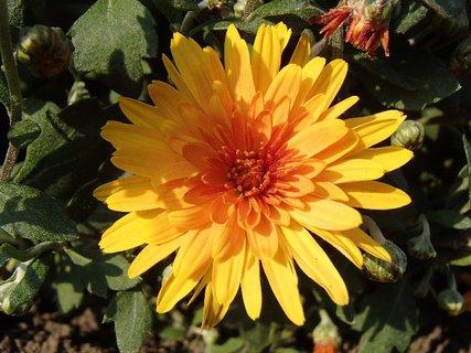 FOTKA - kvitne v polotieni