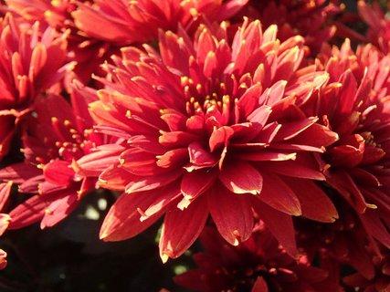 FOTKA - bohato rozkvitnuté