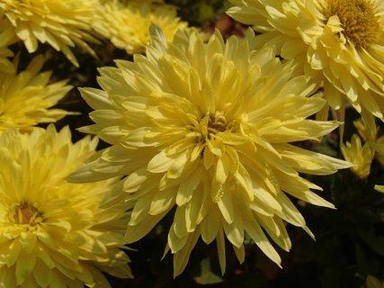 FOTKA - žltá s kvapkami rosy