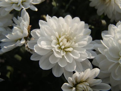 FOTKA - biela neha