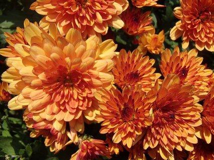 FOTKA - oranžové sú pekné