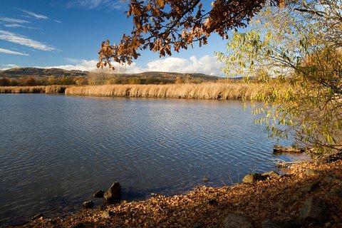 FOTKA - Na břehu Panského rybníka