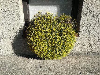 FOTKA - sousedky truhlík s kytičkou