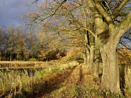 FOTKA - Cesta kolem rybníka.....