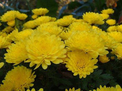 FOTKA - kopec žltých