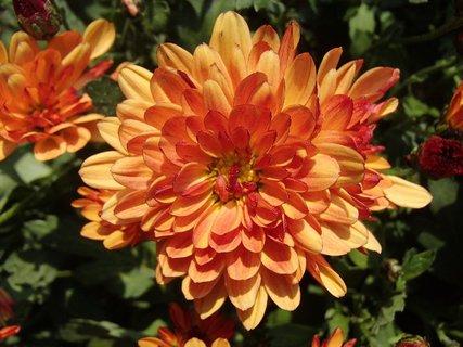 FOTKA - oran�ov� hust�