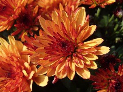 FOTKA - oranžová dvojfarebná