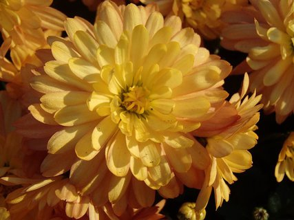 FOTKA - žlté s jemným nádychom do oranžova