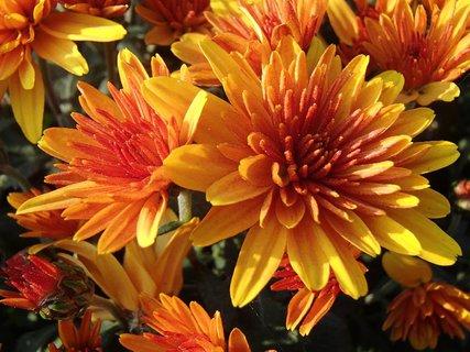 FOTKA - oranžová krása