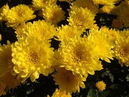 FOTKA - žlté ako slniečka