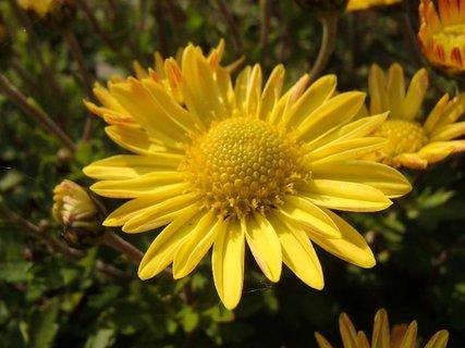 FOTKA - novembrová žltá