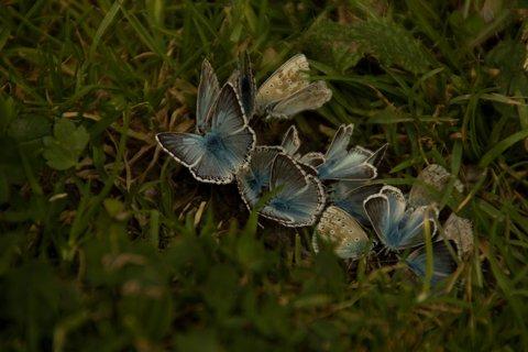 FOTKA - Schwarzleotal - Slet modrásků