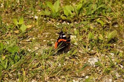 FOTKA - Schwarzleotal - Další motýl