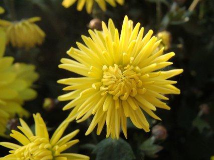 FOTKA - žltá, okatá