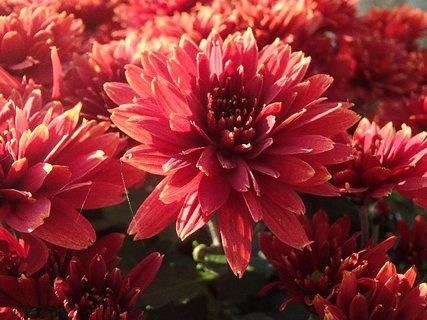 FOTKA - hrdzavej farby