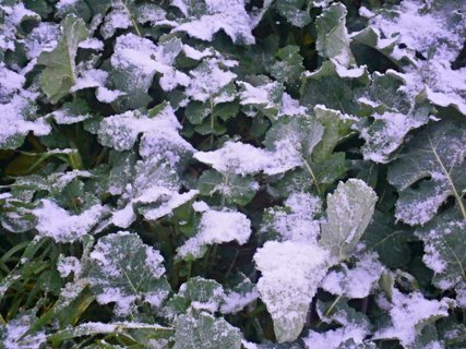 FOTKA - První letošní snížek...