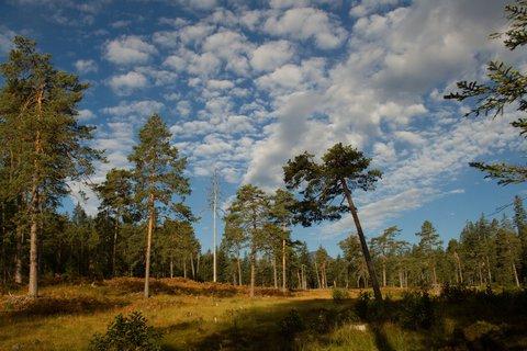 FOTKA - Z Maria Alm přes Kronreith do Saalfeldenu - V lese