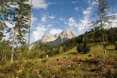 FOTKA - Z Maria Alm přes Kronreith do Saalfeldenu - Pohled z lesa