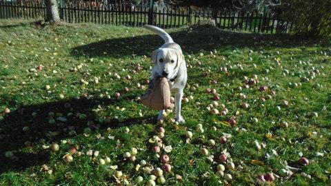 FOTKA - Marley pomáhá na zahradě