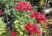 podzimní květinové krásky