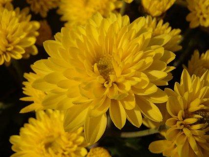 FOTKA - žlté ako kuriatka