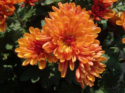 FOTKA - oranžové pospolu