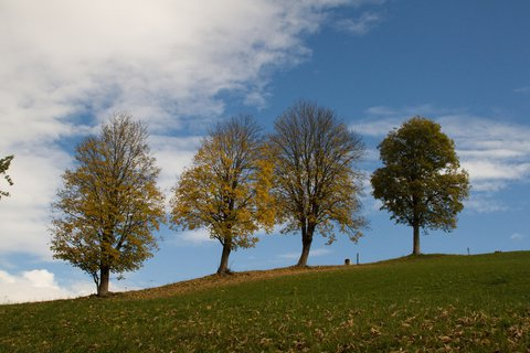 FOTKA - Kolem Ritzensee - Čtyři stromy