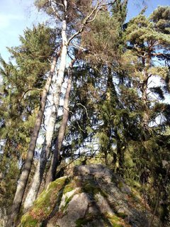 FOTKA - krásné stromy - až do nebe