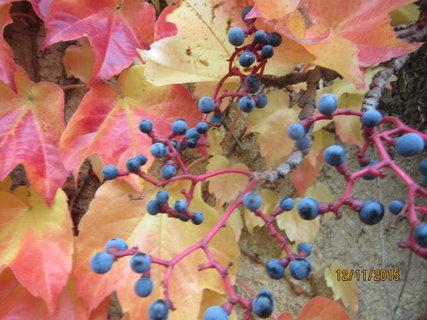 FOTKA - listopádek