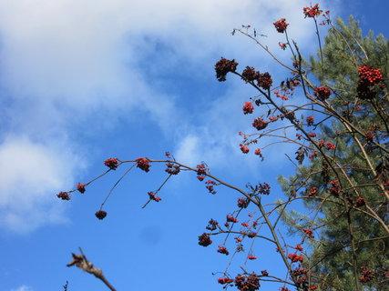FOTKA - podzim u lesa a obloha