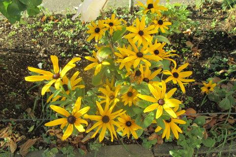 FOTKA - Kvetou i v listopadu