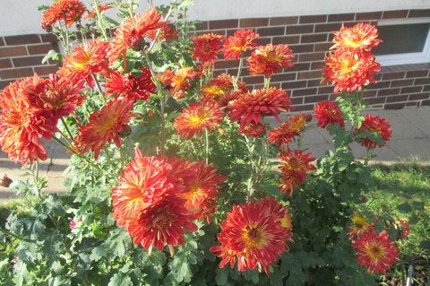 FOTKA - Dnes ,  v plném květu