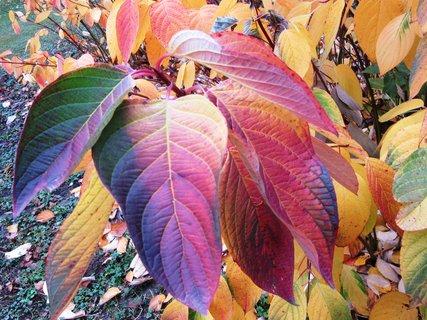 FOTKA - podzim umí barvit