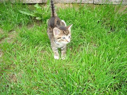 FOTKA - samotné kotě