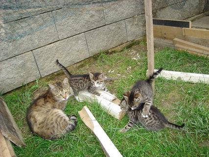 FOTKA - kočičí farma